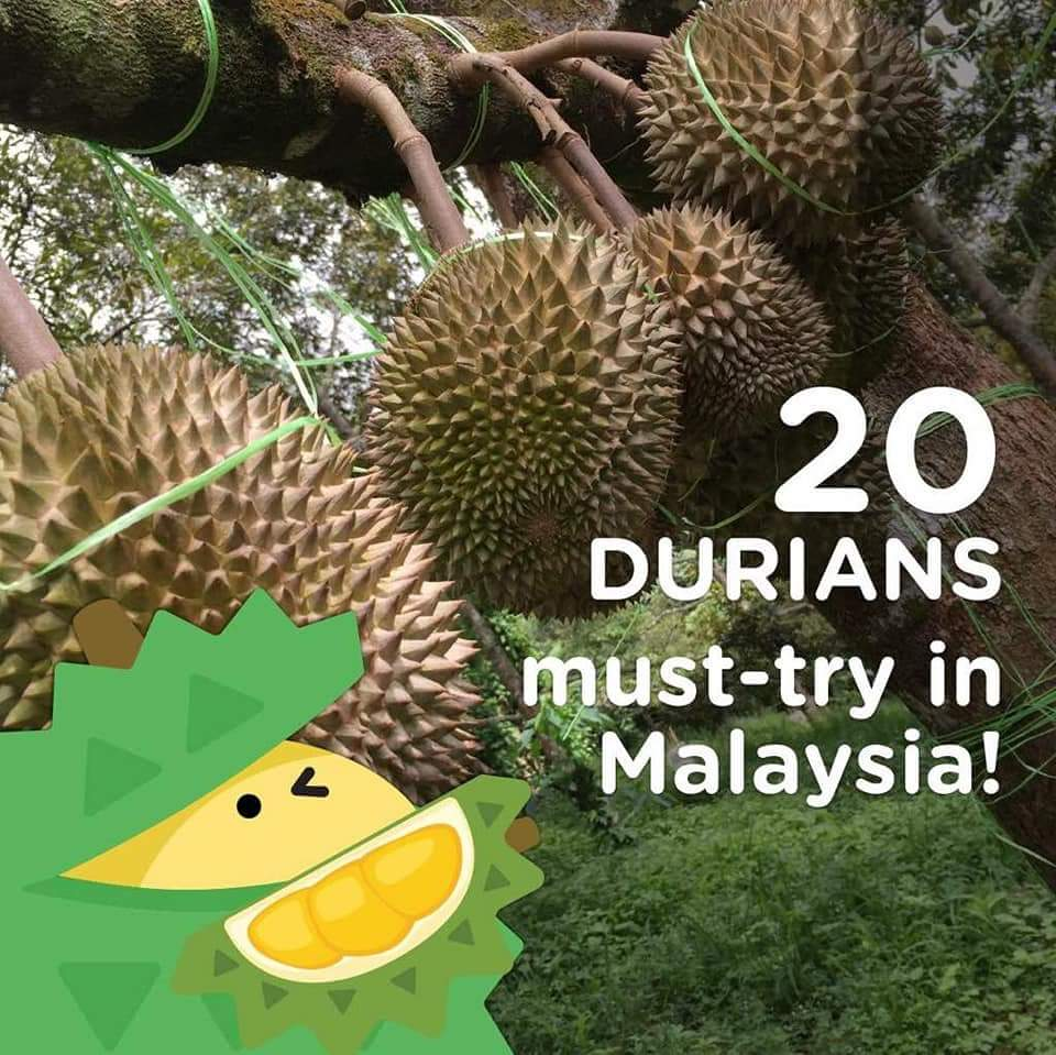 The Best Durian in Malaysia You Must Try!